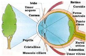 punto cieco percezione visiva